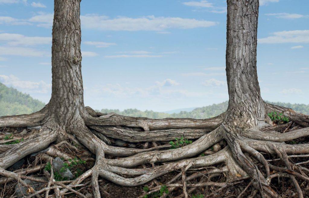 Viața secretă a copacilor